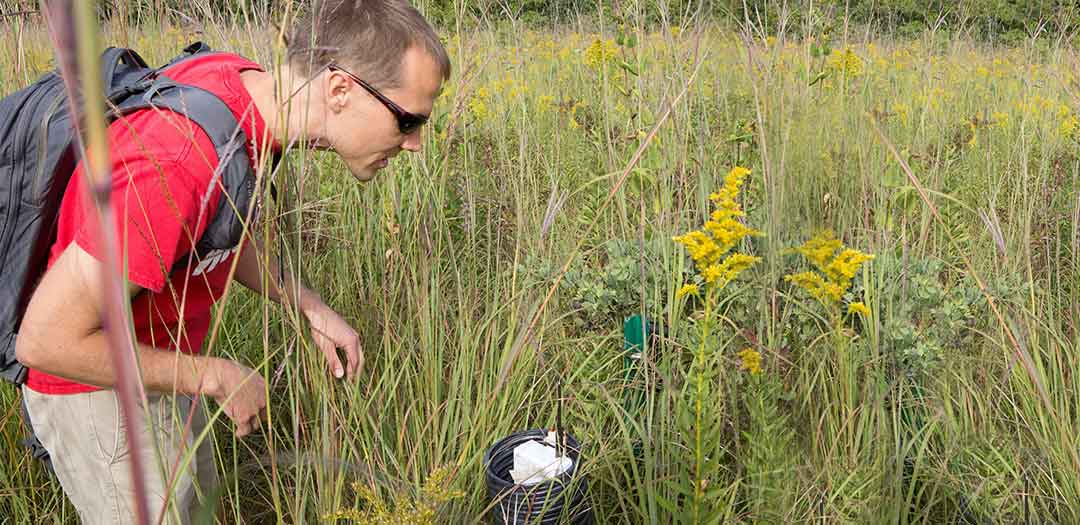 a man checking a vent tube in a tall grass field. Photo credit Eric Booth
