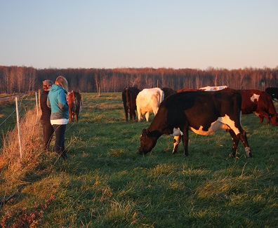 farmers in a field with cattle grazing